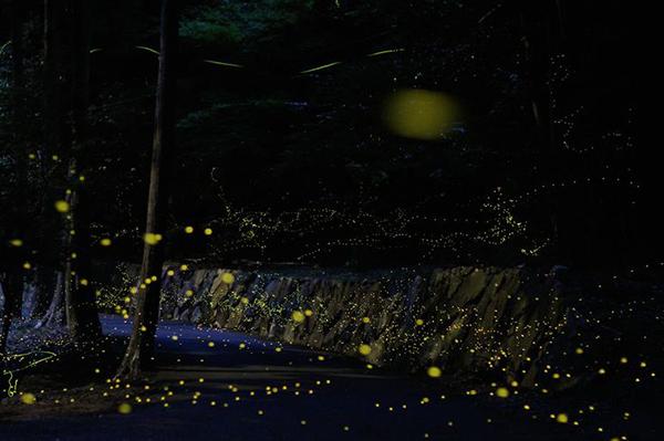 inspirations graphiques photographie Tsuneaki Hiramatsu | Firefly