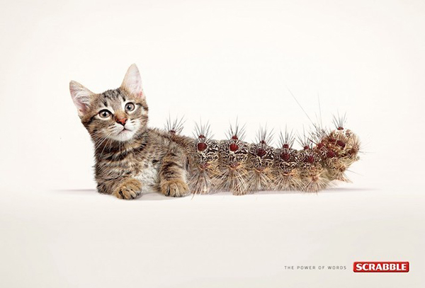 graphismes inspirations pub Twiga | Scrabble Words : Cat-erpillar