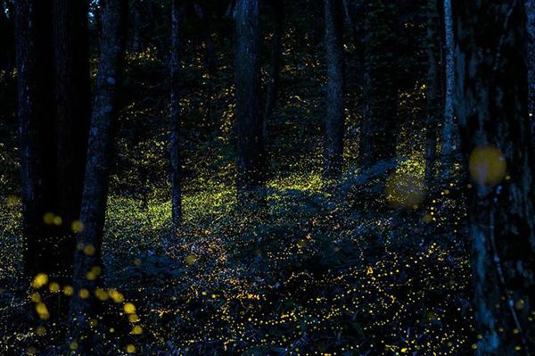 Tsuneaki Hiramatsu | Firefly